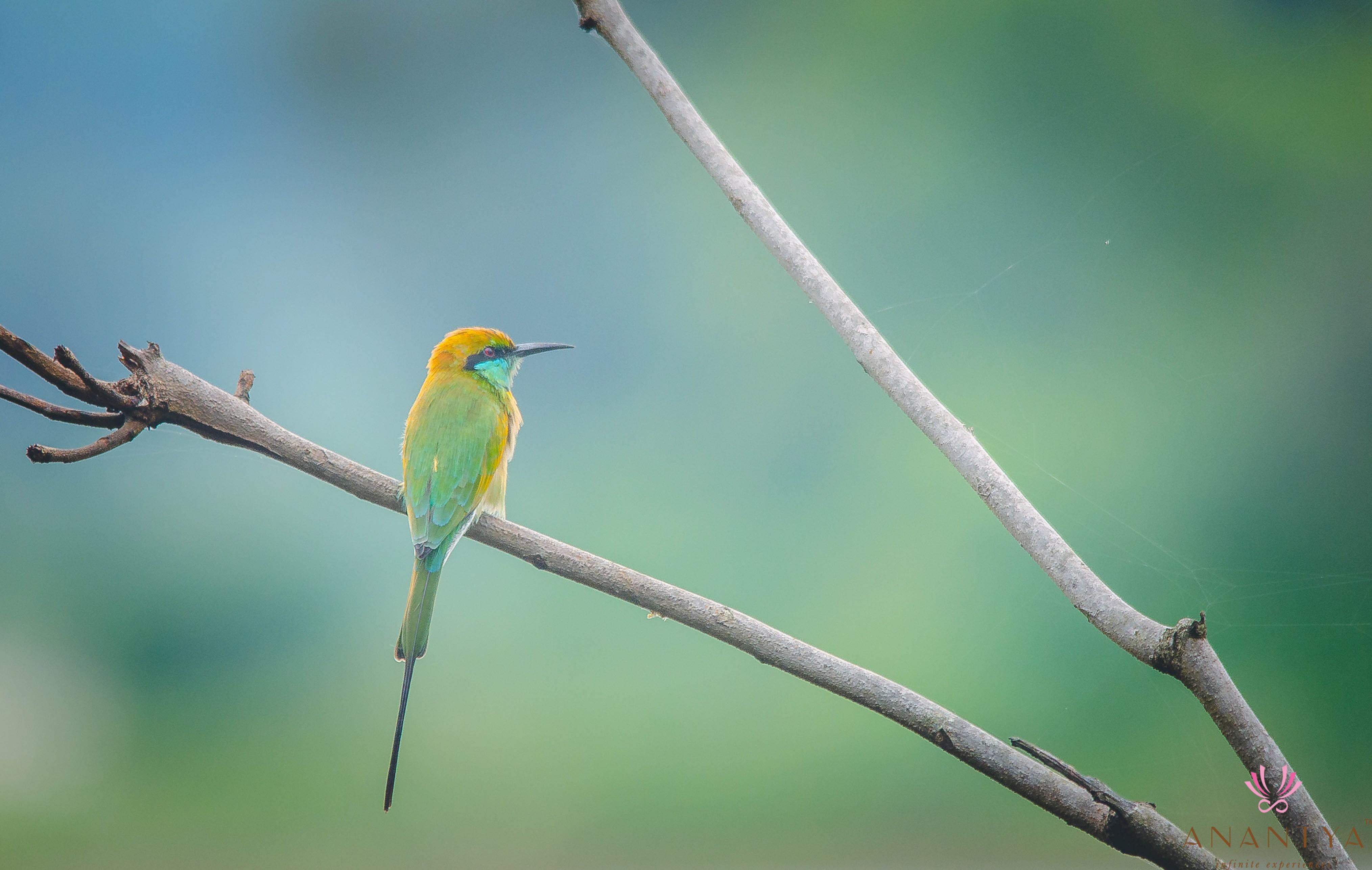 little-green-bird-0027-compressed