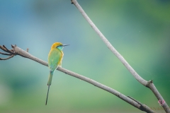 little-green-bird-0027-compressed