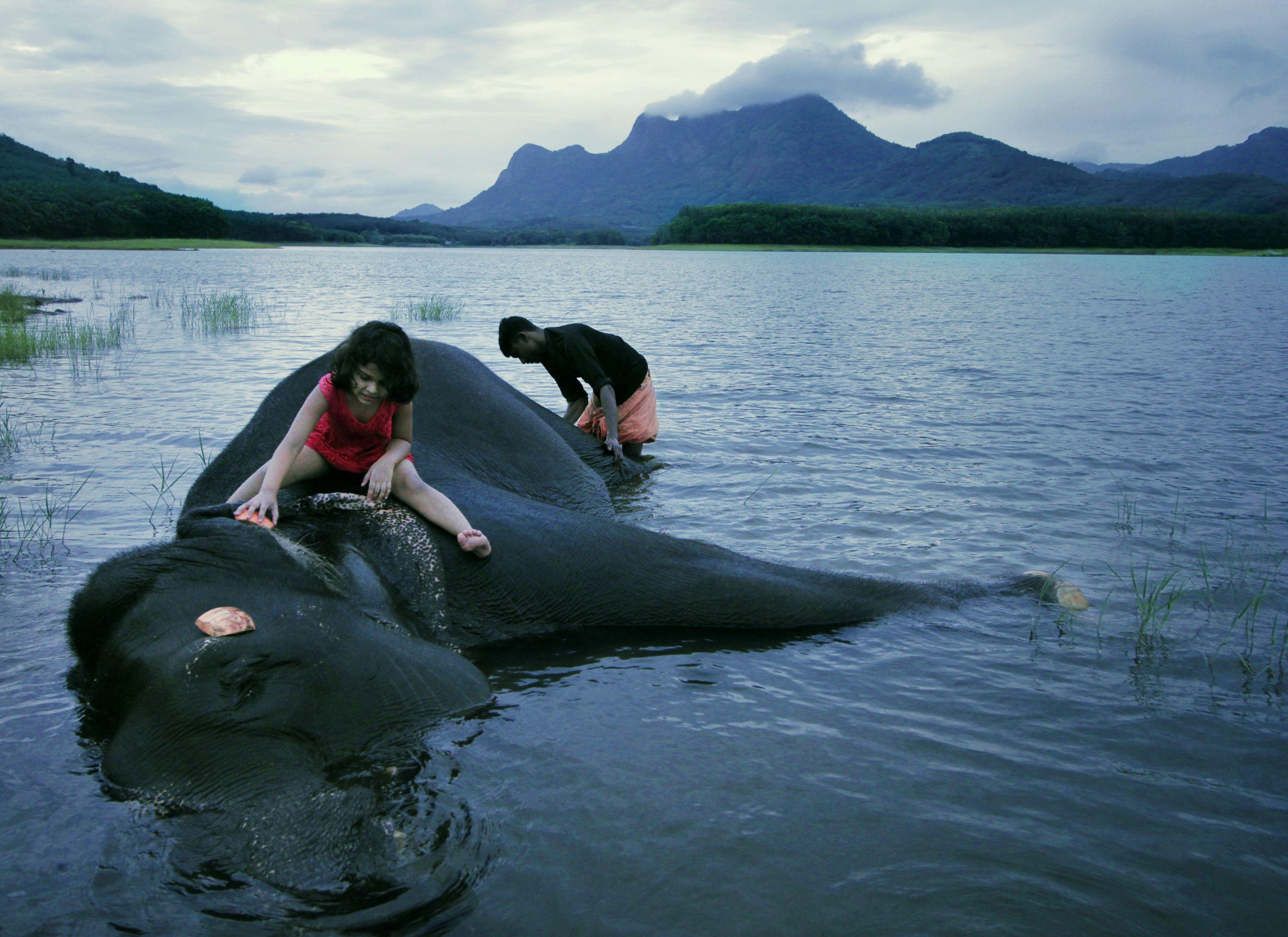 bathing-elephant-HR-compressed